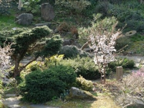 zjapanesegardn